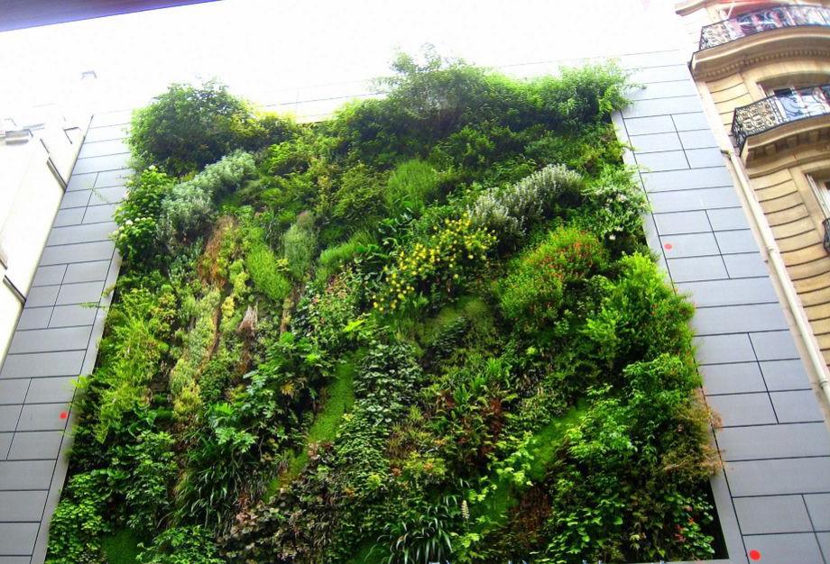 中国植物墙网浅谈垂直绿化的优点 运用的原则和利用形式