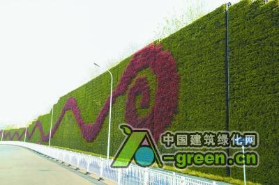 火车站北广场旁的绿化墙