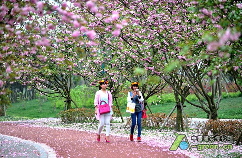成都中心城区的街头四季有花、处处见花,这是成都市春景秋色四季景观、花重锦官城和二环花冠等工程力图给市民创造的养眼福利。 为此,成都市2016年十大民生实事中一个具体项目确定为,今年建成春景秋色四季景观优化示范工程20个、屋顶绿化1万平方米。 5月29日,华西都市报记者从成都市政府官方网站了解到,根据本月公布的成都市2016年十大民生实事细化方案,成都穿红戴绿的想法有了明确的前进步骤,即在一、二季度完成准备工作的基础上,春景秋色四季景观优化示范工程的20个点位,从即将到来的6